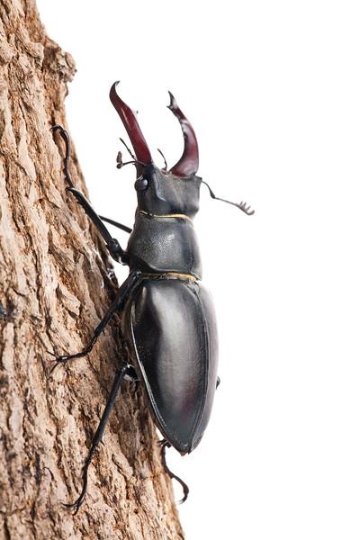 BT Insekt Nr.  BT Insekten 42-37592870
