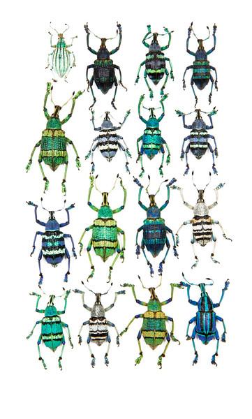 BT Insekt Nr.  BT Insekten 42-32948544