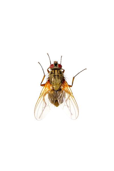 BT Insekt Nr.  BT Insekten 42-37592052
