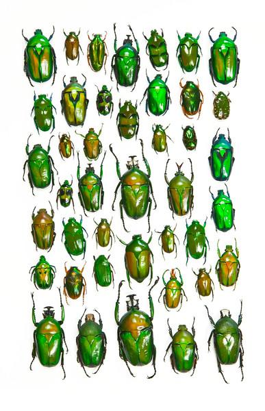 BT Insekt Nr.  BT Insekten 42-32948557