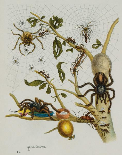 BT Insekt Nr.  BT Insekten HU024981