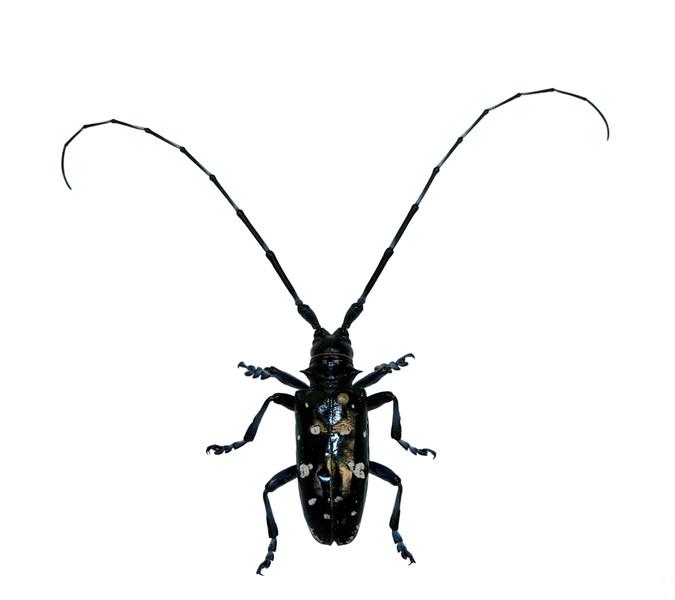 BT Insekt Nr.  BT Insekten 42-36663246