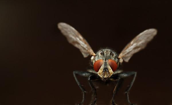 BT Insekt Nr.  BT Insekten 42-20913109
