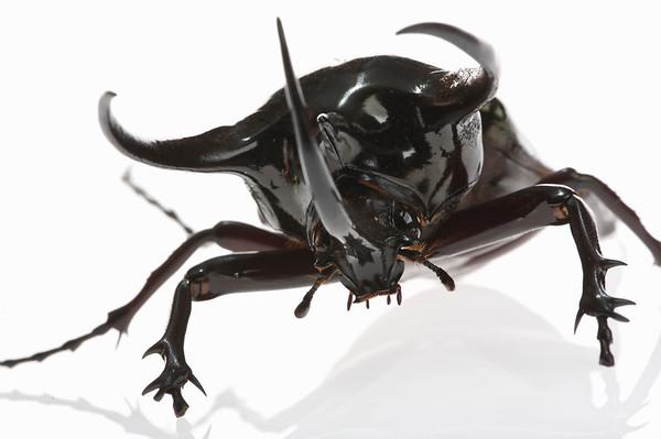 BT Insekt Nr.  BT Insekten 42-49807355