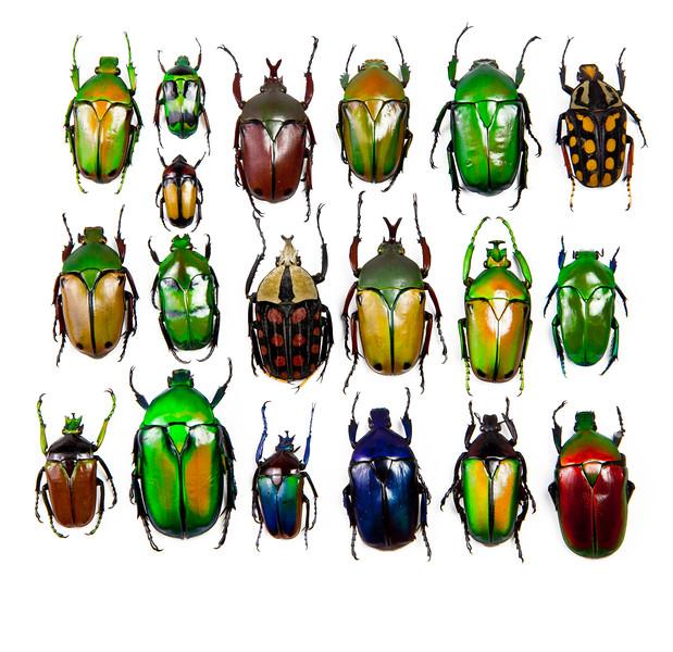 BT Insekt Nr.  BT Insekten 42-32948537