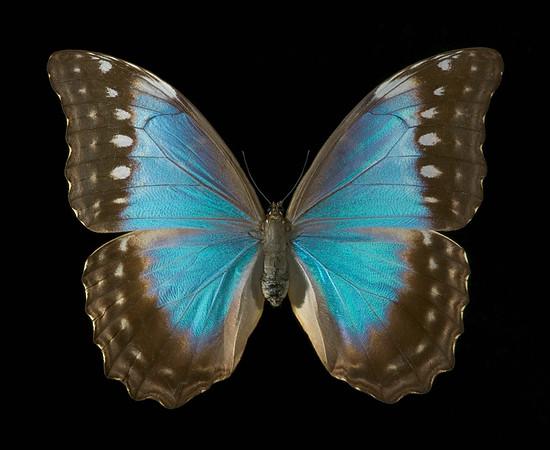BT Insekt Nr.  BT Insekten 42-24866882