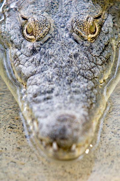 Hamat Gader Crocodile farm