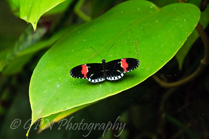 Butterfly in the Tropical House