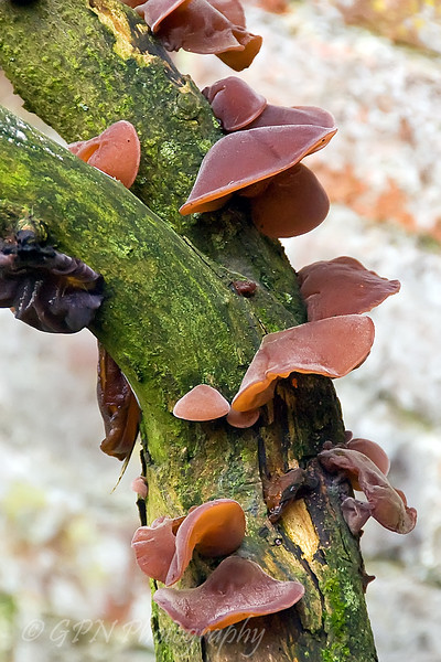 Fungus growing on a tree