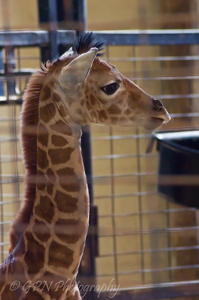Christa (4 days old)