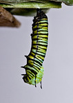 1:42:613  