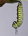 1:42:513  