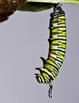 Look carefully to the back of its head
