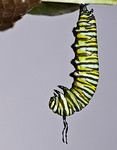 1:42:449 