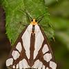 Neighbor Moth