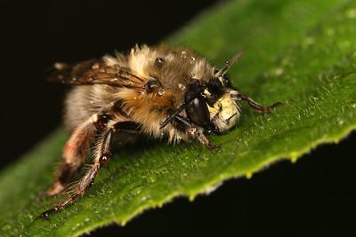 4707_hymenoptera