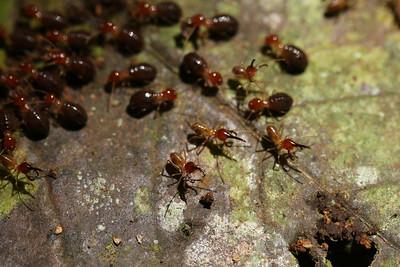1133_termites
