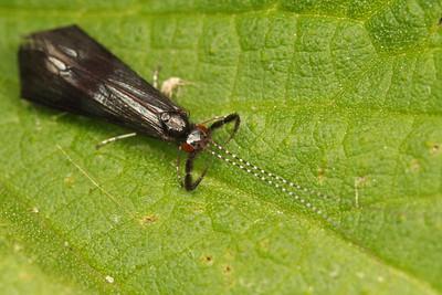 6091_trichoptera