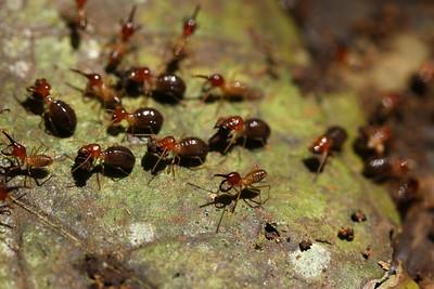 1138_termites
