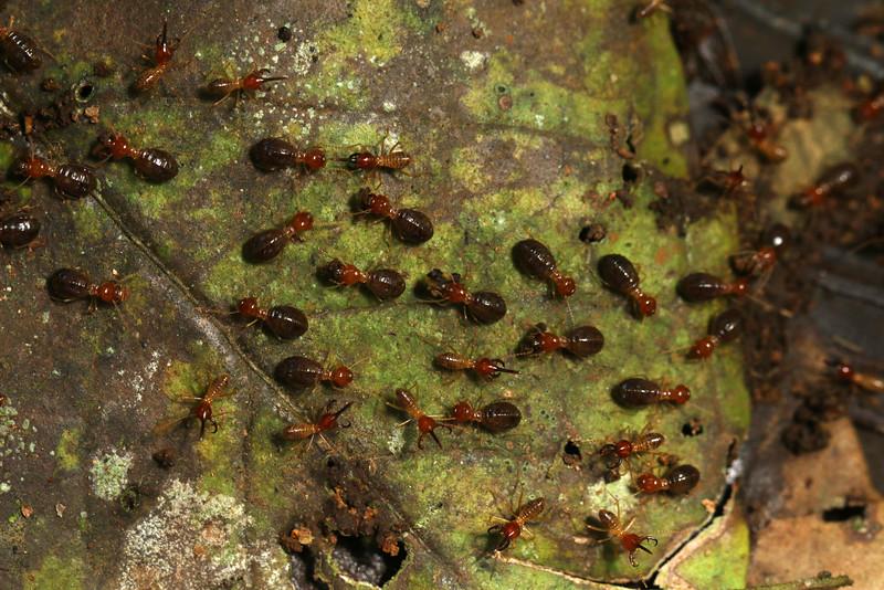 1110_termites