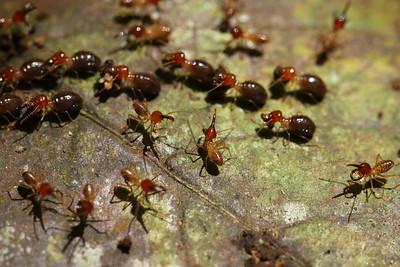 1141_termites