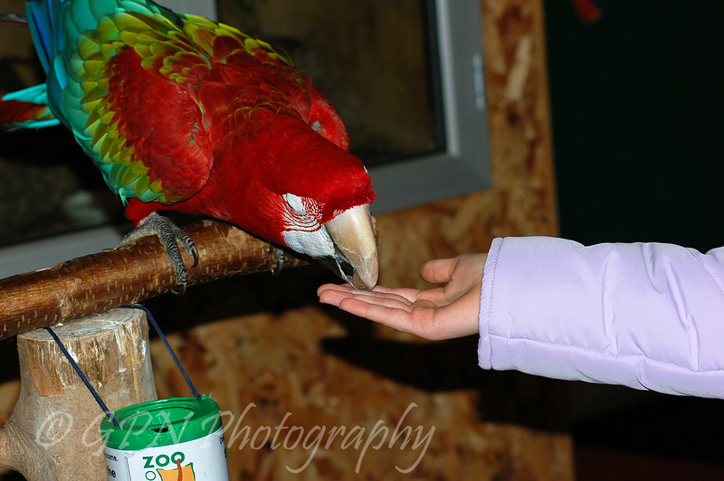 Macaw taking money & putting it into the collection tin