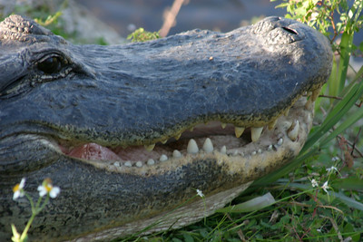 Smile, Everglades, October 2006