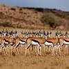 Namibia - Kalahari Desert - Kagalagadi Transfrontier Park
