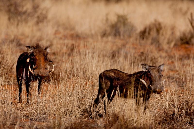 Namibia - Kalahari Desert - Tswalu Kalahari Reserve