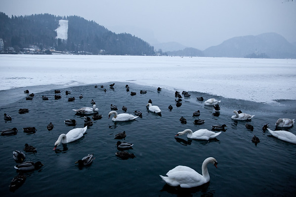 Lake Bled freezes over