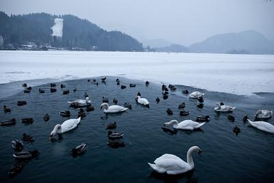 Lake Bled freezes over