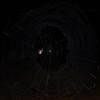Garden Orb Web