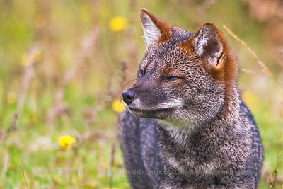 Mammals and Birds of Patagonia