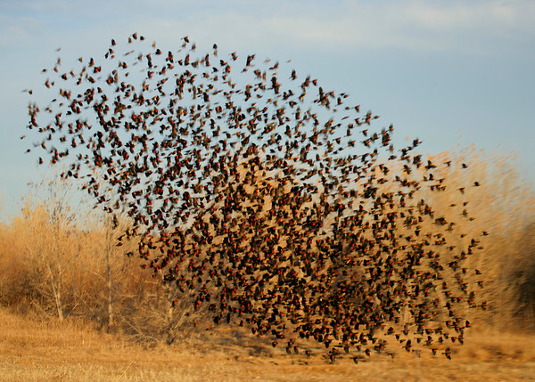 BT Vögel Nr. 42-18234241