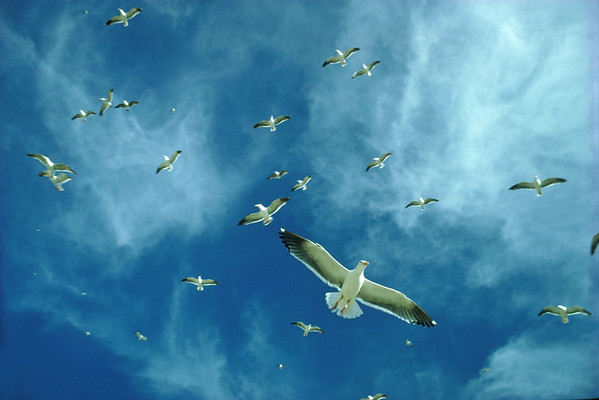 BT Vögel Nr. 42-15307579