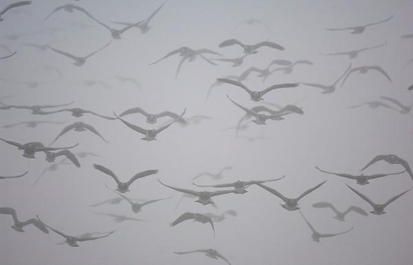 BT Vögel Nr. 42-23856317
