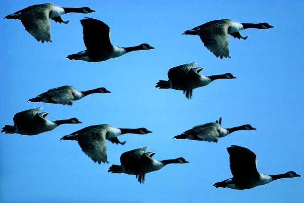 BT Vögel Nr. 42-26271028