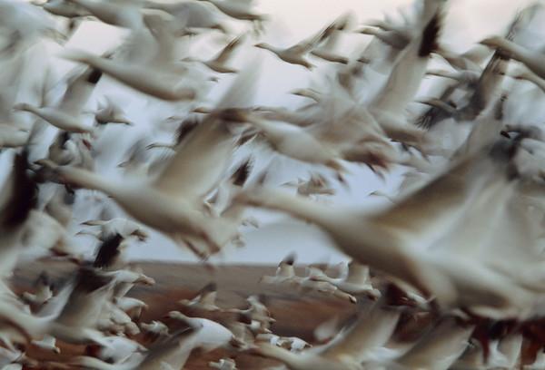 BT Vögel Nr. 42-15261227