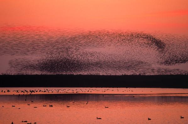 BT Vögel Nr. 281398
