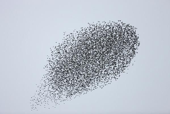 BT Vögel Nr. 00438169