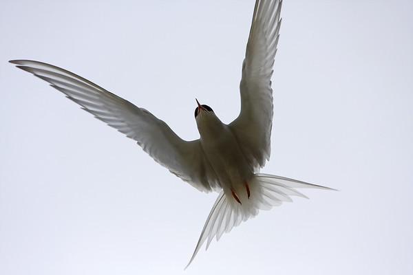 BT Vögel Nr.