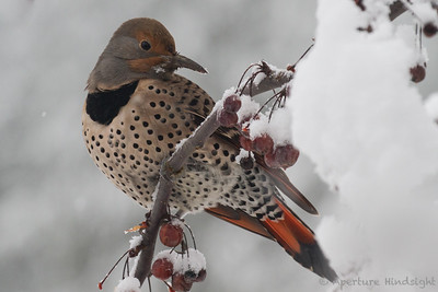 Winter Flicker