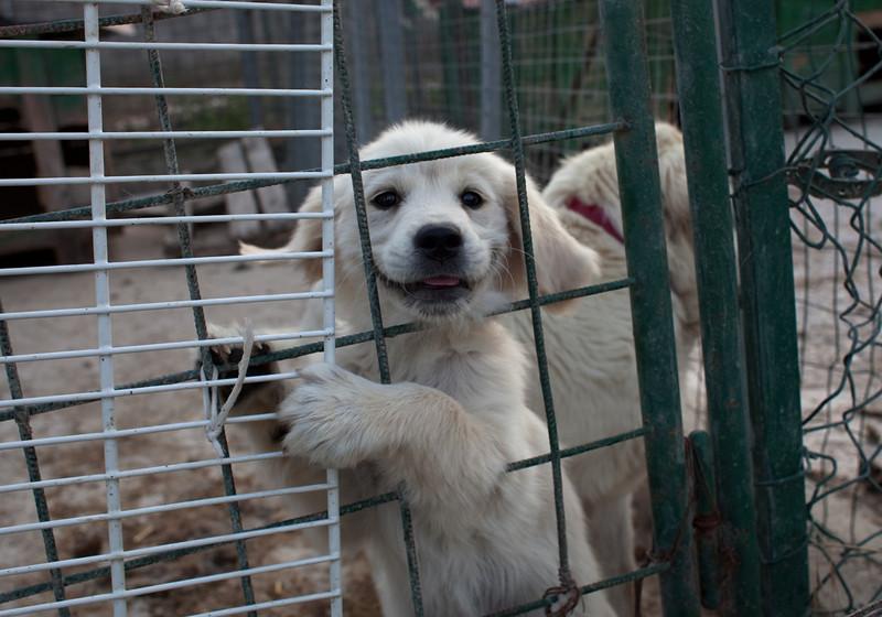 Porta Dei Parchi Sheepdog Puppy