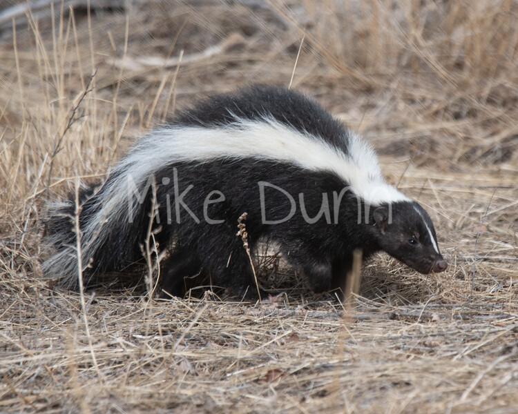 Skunk-2
