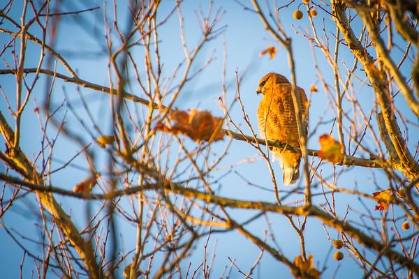 Watching like a Hawk