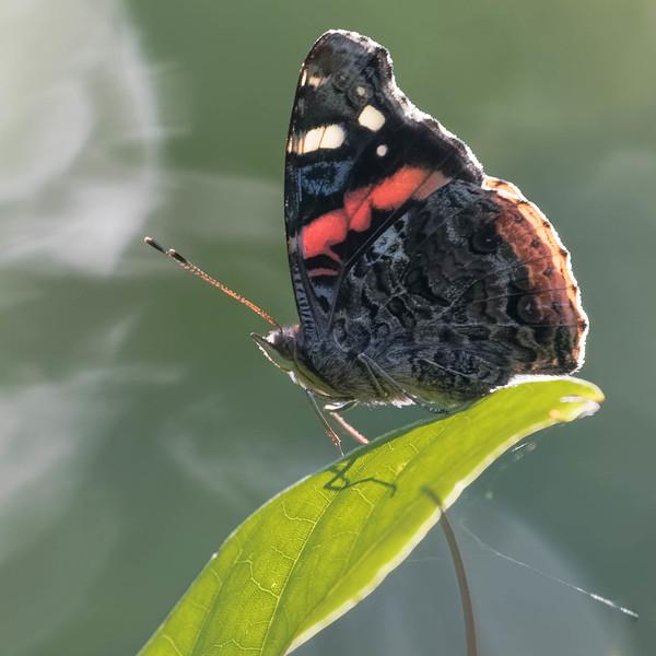 Butterfly<br /> Location: Pinecraft Park, Sarasota FL