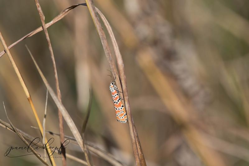 Moth<br /> Location: Myakka River State Park, FL