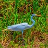 Costa Rica Fauna