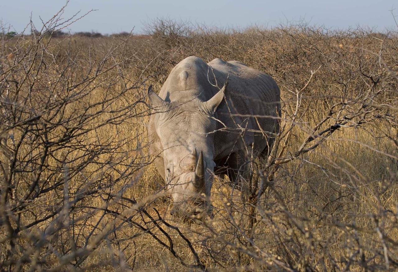 Waterburg Rhino
