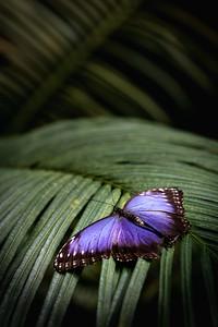 Motýl v džungli